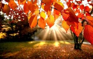 L'autunno in Medicina Tradizionale Cinese. La stagione della Trasformazione…