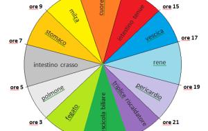 Ciclo circadiano:  l'orologio energetico dei nostri organi secondo la Medicina Tradizionale Cinese