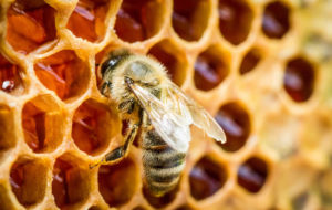 Miele: istruzioni per l'uso