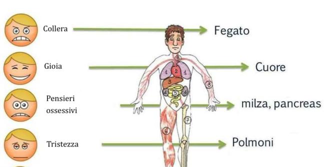 Organi ed emozioni in Medicina Tradizionale Cinese. Le energie che influenzano la nostra salute