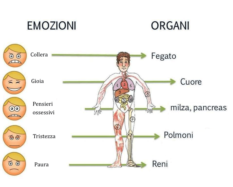 salute-organi