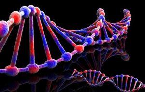 Il nostro destino è nel DNA?