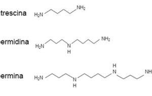Cosa sono le poliammine e in quali alimenti si trovano?