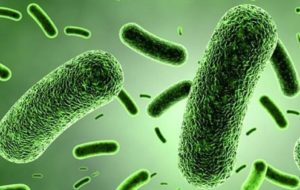 Conosciamo il nostro #microbiota intestinale?
