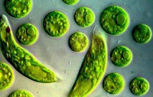 Perché le verdure verdi in cottura cambiano colore?