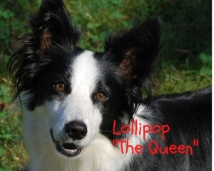 Lollipop The Queen il punto di vista del cane