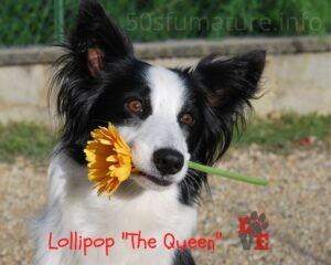 Lollipop Fiore in Bocca