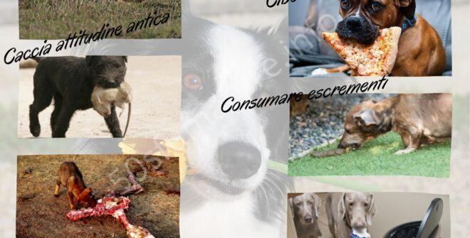 Il cibo della salute per gli animali: sopravvivenza o benessere?