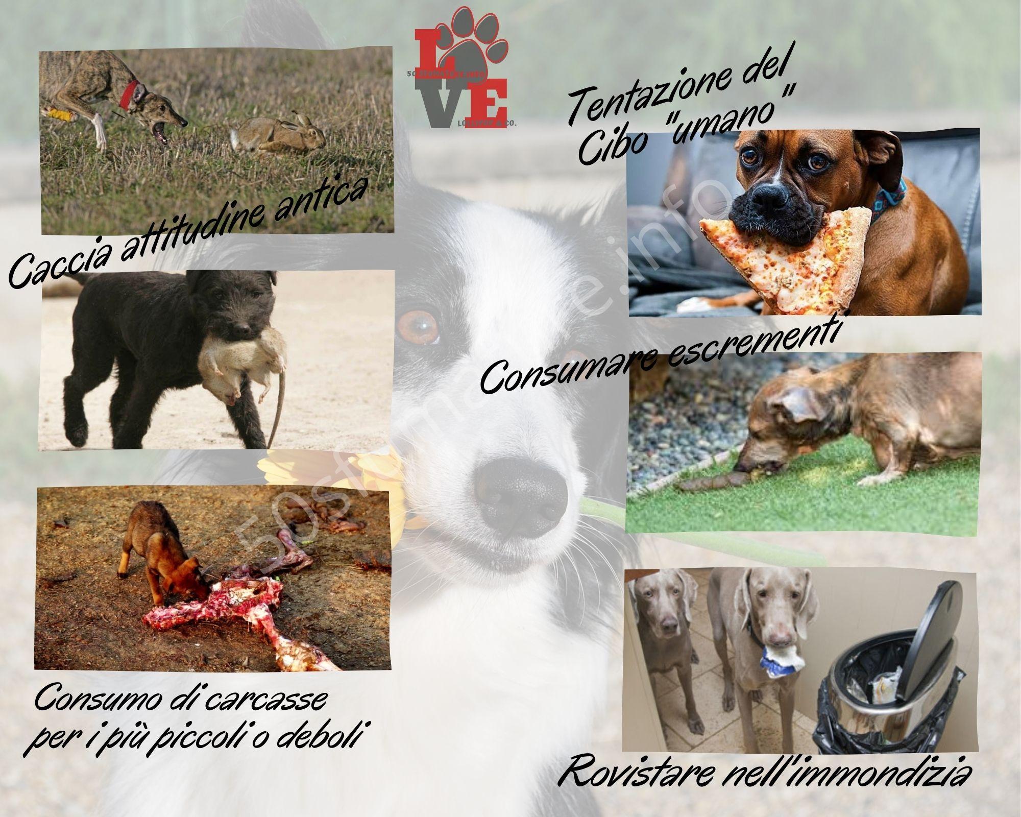 Tutto ciò che i cani possono mangiare