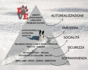 Piramide Maslow degli Animali