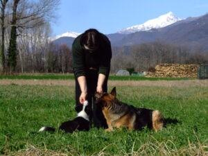 Educare cucciolo e adulto