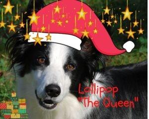 Natale Lollipop The Queen