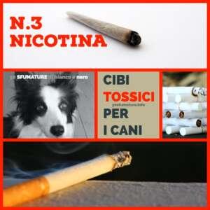 Cibo tossico per animali nicotina