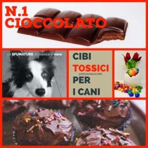 CIBI TOSSICI PER CANI 1 cioccolato