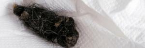 gatto bolo di pelo