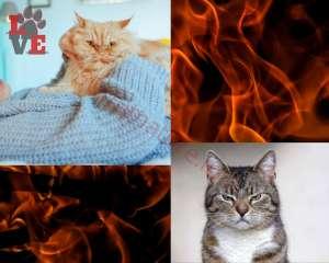 Gatti che non gradiscono Abbracci