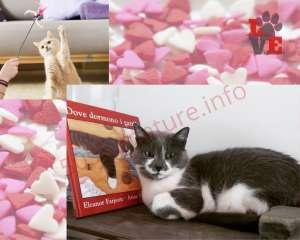 Gatti e Giochi belli