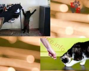 Gatti e Laser