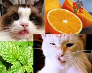 Gatti e Odori forti