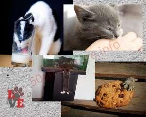 Gatti e sgridate