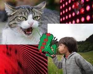 Gatti e soffiare
