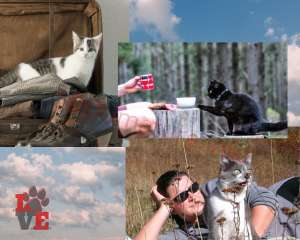 Gatti portati ovunque