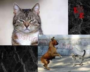 Gatto Sguardo fisso