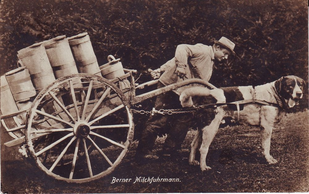 CANE e UOMO - Una antica collaborazione - Cane traina il carretto del lattaio