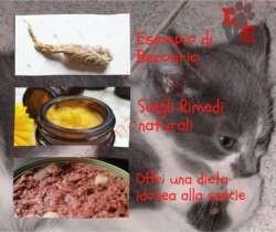 Boli di pelo del gatto